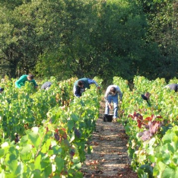 Avanzando en el viñedo